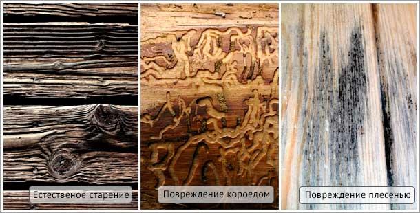 повреждения древесины