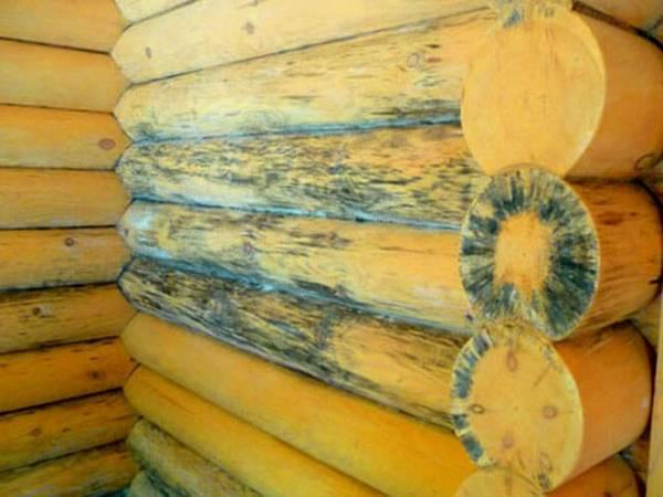 Как убрать плесень с деревянных поверхностей, избавить доски